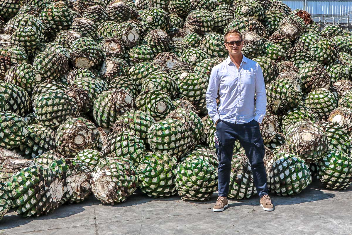 David and blue agave